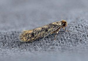 NYC moth control service